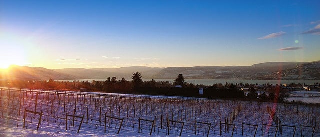 tantalus vineyard winter
