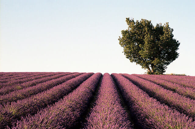 Drinking a good Provence rosé transports you to the region.