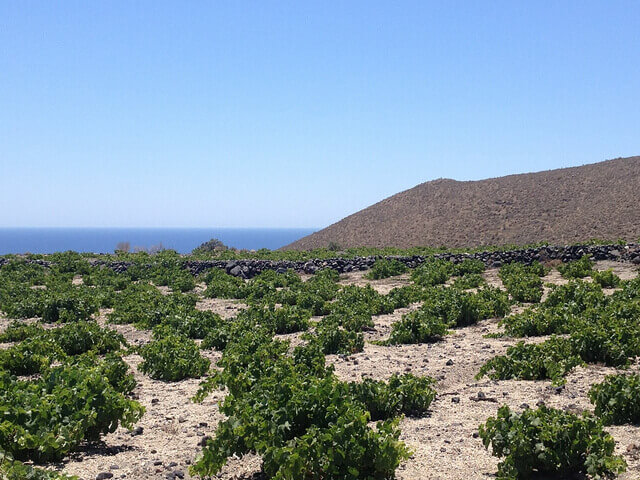 A vineyard in Santorini, part of what make Greek wines distinct.