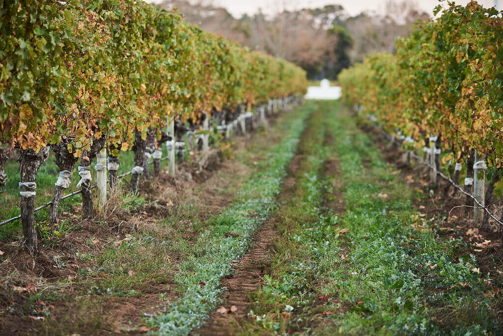 Voyager Estate, home to fantastic Australian Chardonnay.