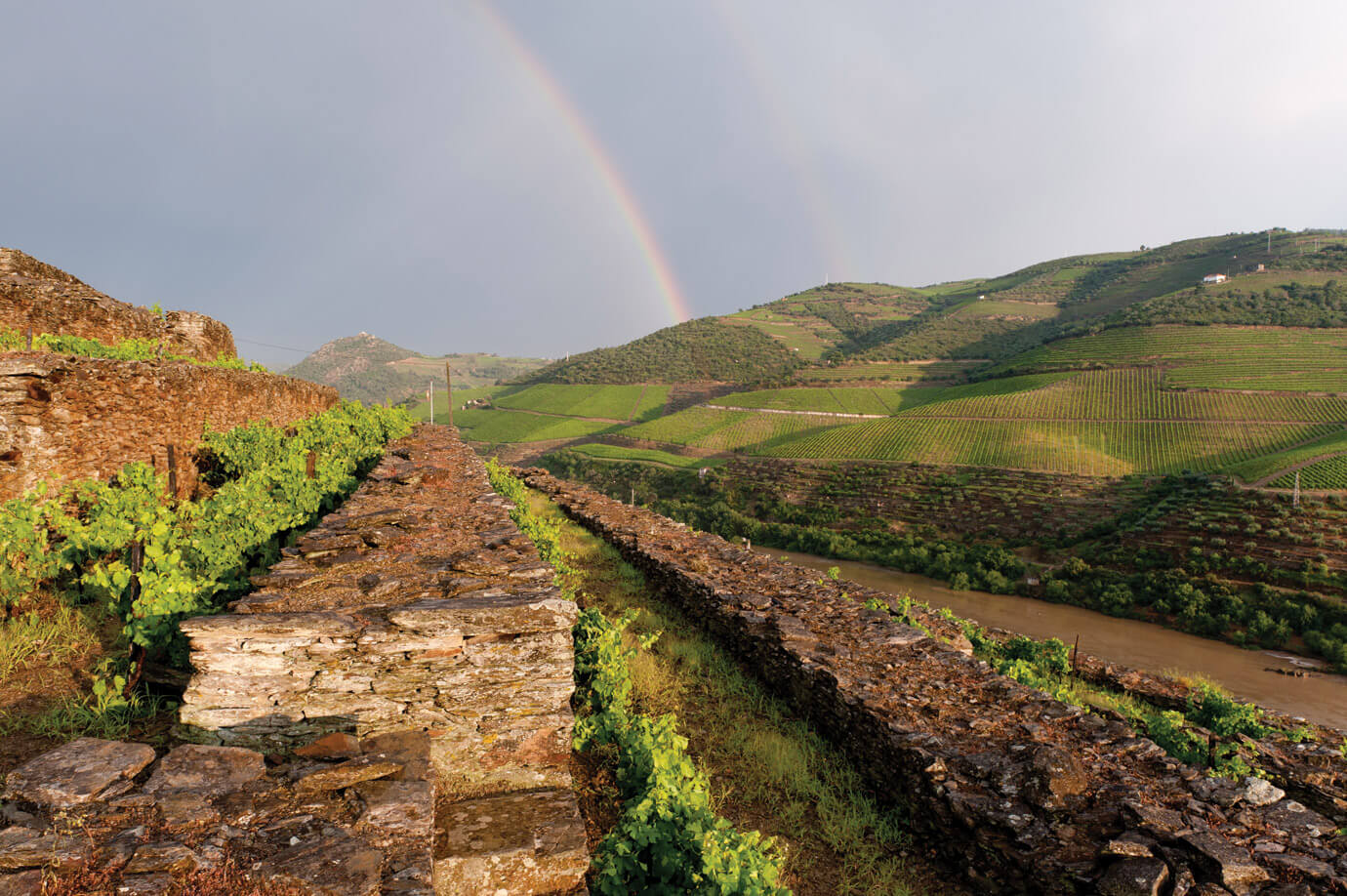 The terraced vineyards of Quinta do Tua, party of Symington Family Estates.