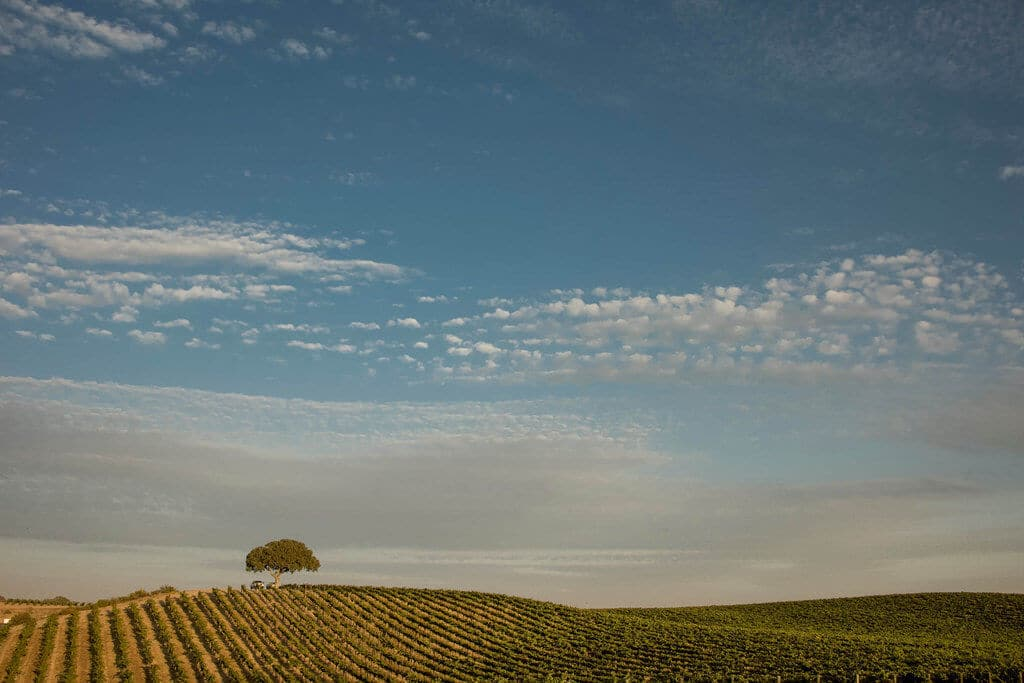 A lovely view of Paso Robles wine country.