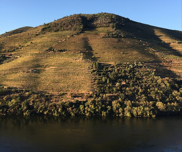 A fine view for drinking Port wine at Quinta dos Malvedos.
