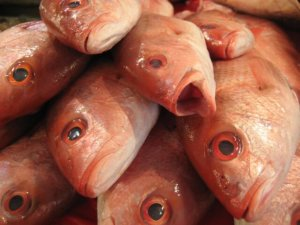 Which wines contain isinglass, made from fish bladder?