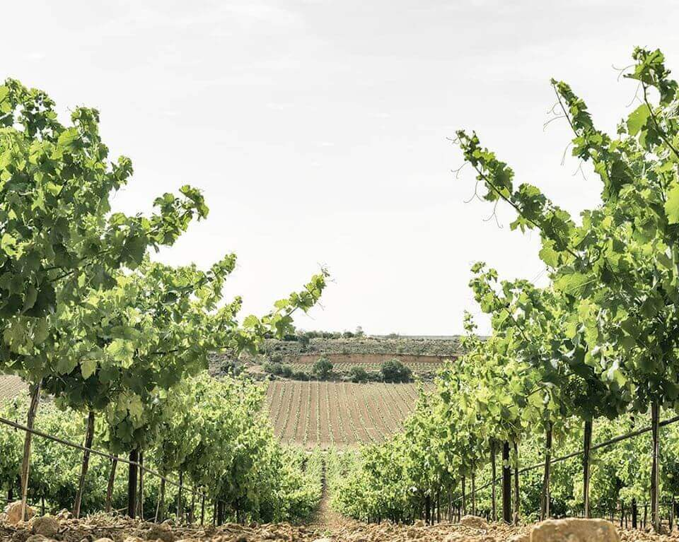 VIneyard at Bodegas Chozas Carrascal