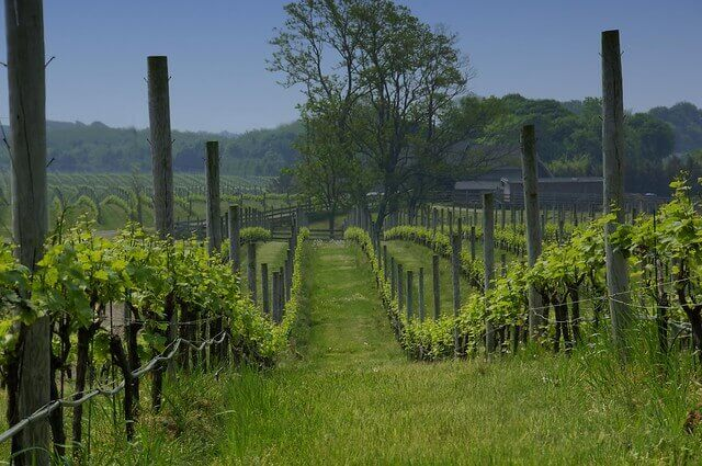 Macari Vineyards on Long Island